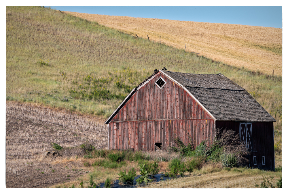 A view of the Palouse.