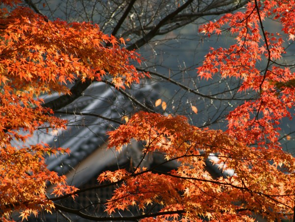 Aminus3 Featured photo Nanzenji - 2 | 1 December 2006