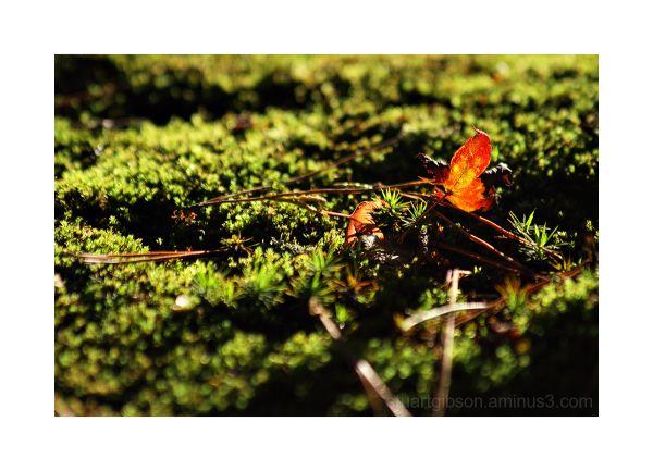 秋 (Aki) - Autumn