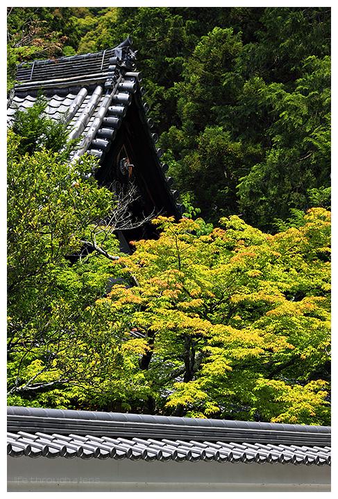 Nanzenji - 南禅寺, 新緑