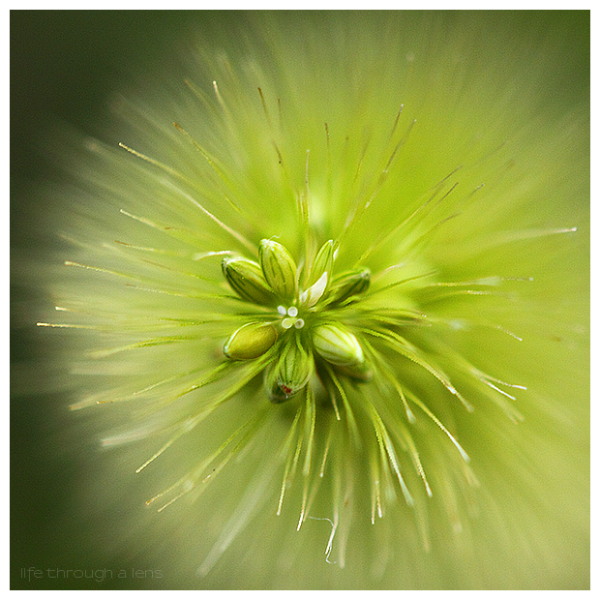 Aminus3 Featured photo green burst | 2 August 2010