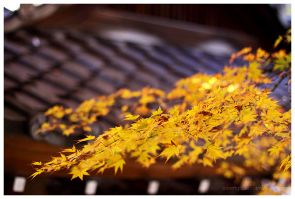 eaves and leaves