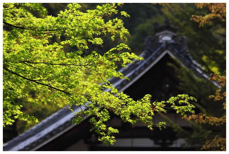 南禅寺の新緑 - new green, at Nanzenji