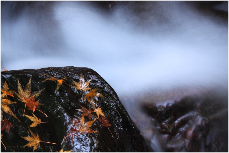 water and leaves: I/IV