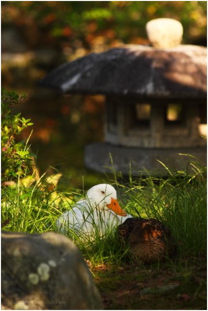 daffy & friend