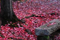 petals & stone
