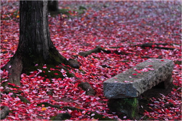 Aminus3 Color Featured photo petals & stone | 20 November 2012