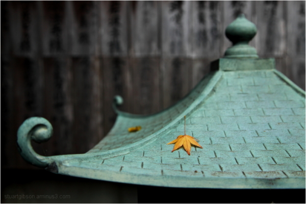 eaves & leaves