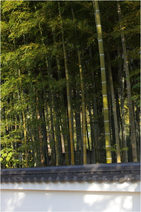 bamboo: at manpukuji (萬福寺)