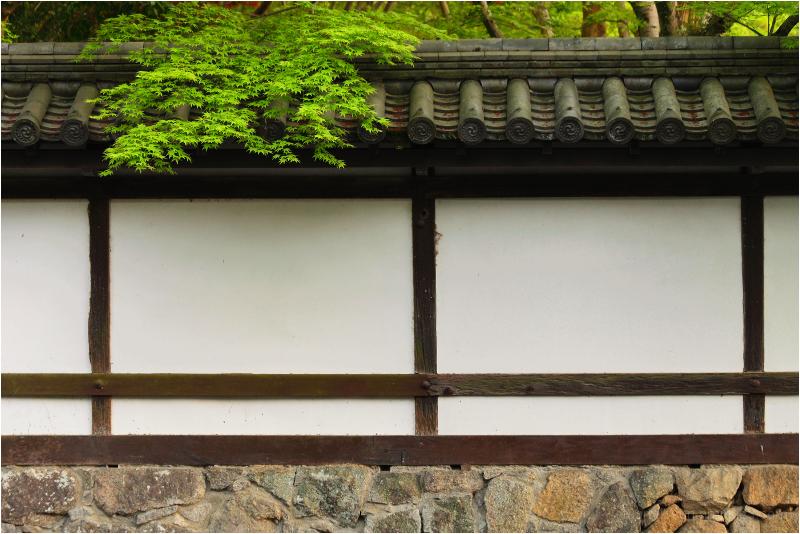 maple, at Nanzenji