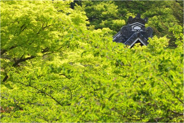 Spring maple, at Nanzenji