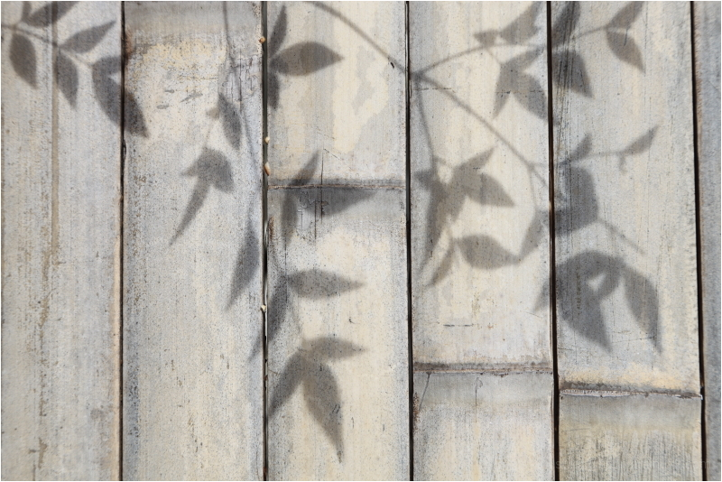 midday shadows