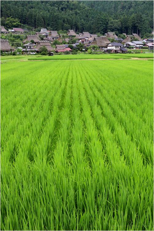 pastures of plenty, in Miyama - 美山