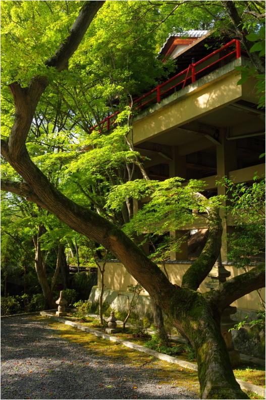 tree house?