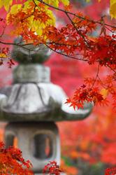 lantern in Fall