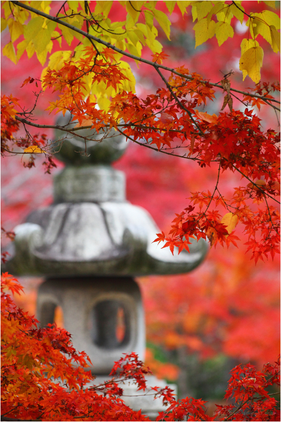 Aminus3 Featured photo lantern in Fall | 21 November 2013