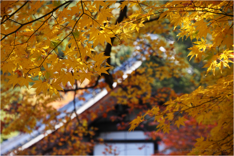 fall, at Nanzenji