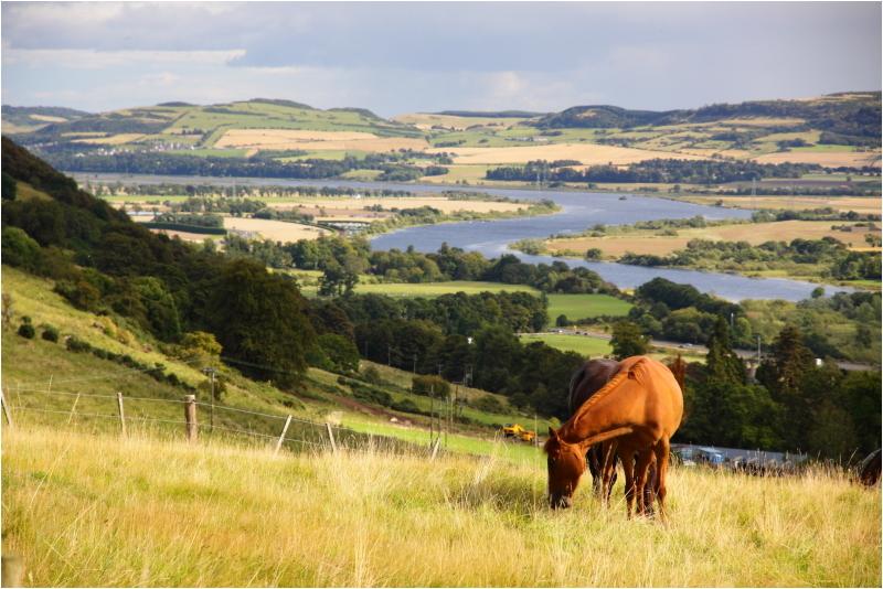 pastures of plenty