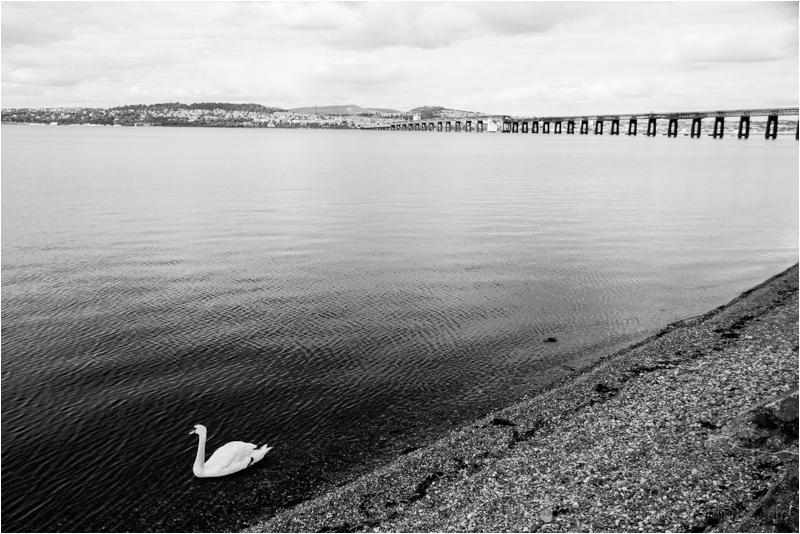hmmm.....to swim or take the bridge.......(?)