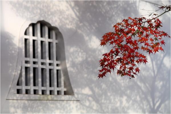 Fall, at Shinnyodo - 真如堂