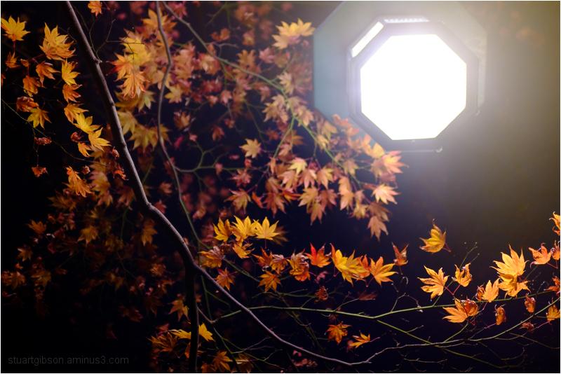 fall, by night