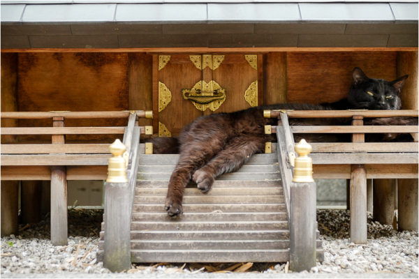 the giant cats of Kyoto