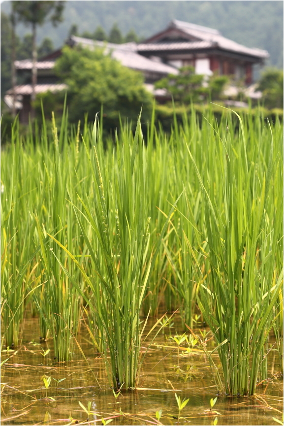 静原 - Quiet Field