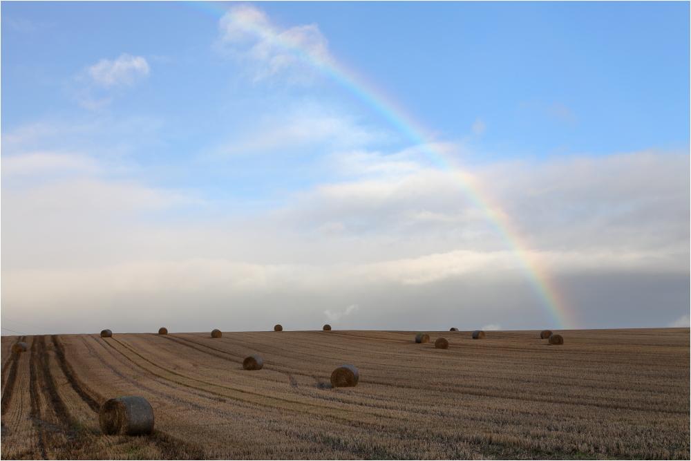 fields of gold?