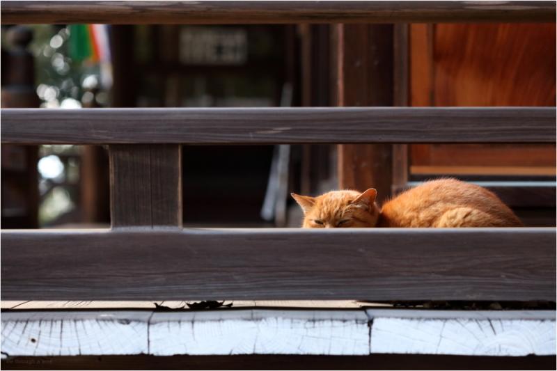 a Sunday cat nap