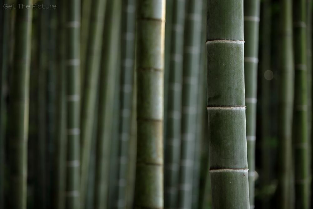 bamboo encounter