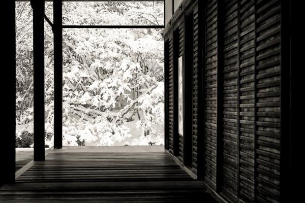 frozen hallways
