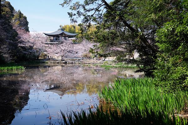 Kajuji - 勧修寺