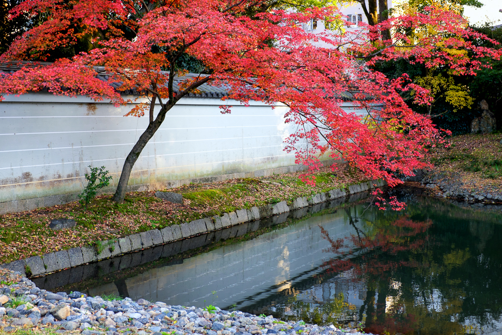 Autumn, in the Emperor's Palace Park