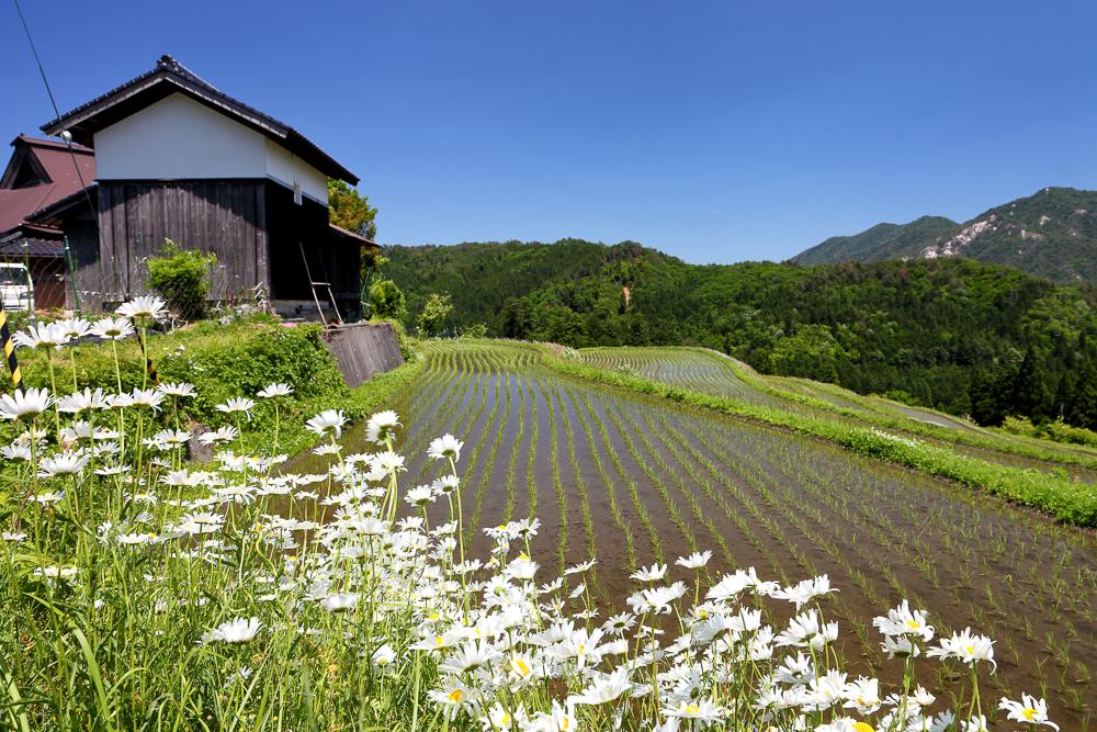 Spring - in Hata, Takashima