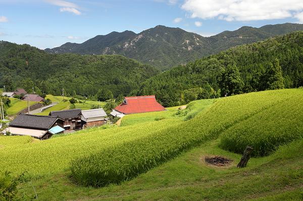 Summer - in Hata, Takashima
