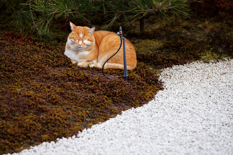 a soft but dangerous place to cat nap