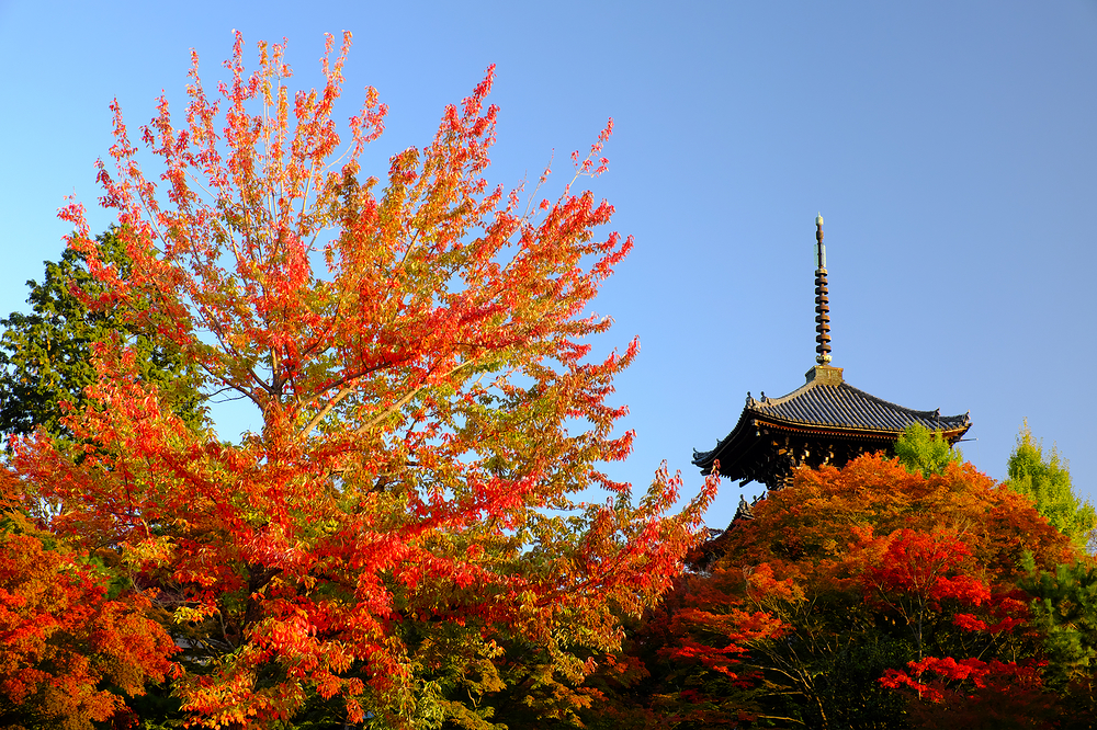 Fall, at Shinnyodo