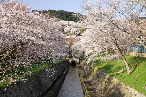 the dark way to Kyoto