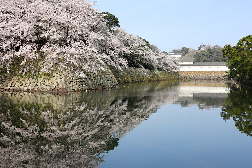 """Wow"" views around Hikone Castle (ii)"