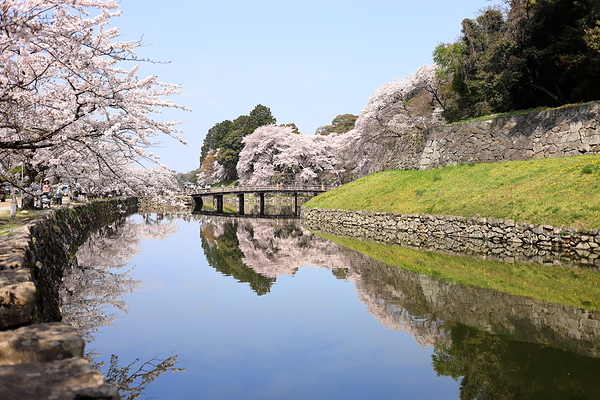 """Wow"" views around Hikone Castle (iii)"
