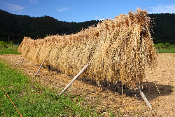 the bearded rice stalk beast of Kyoto
