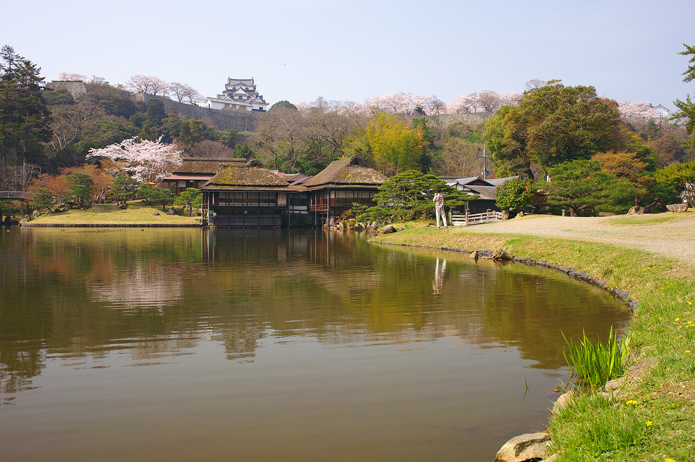 Hikone Castle from Genkyuen