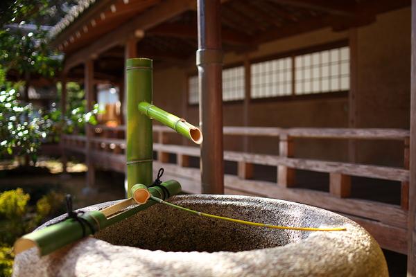 fresh bamboo at Saikyoji Temple