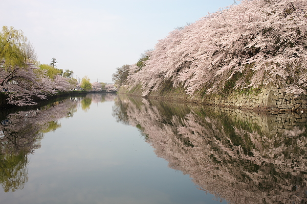 the walls of Hikone Castle