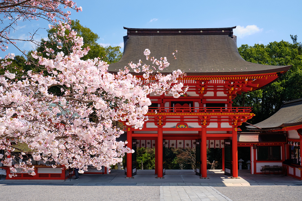 spring blossoms, at Ohmi Shrine