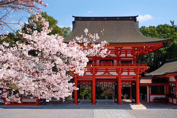 spring blossoms, at Ohmi Shrine