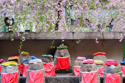 jizou under the blossoms