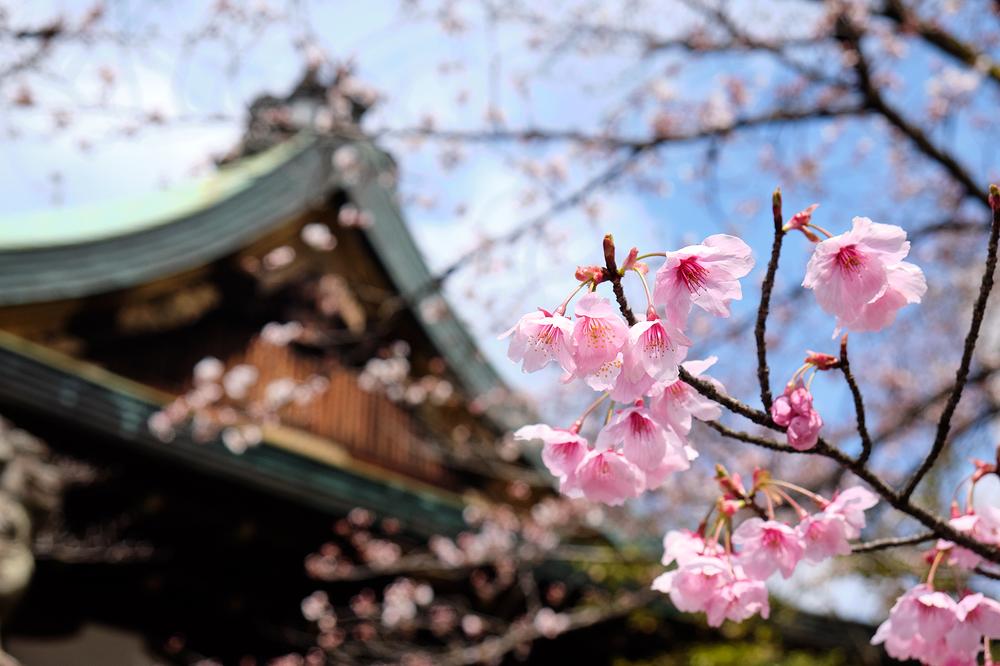 Blooming, at Tenson Jinja