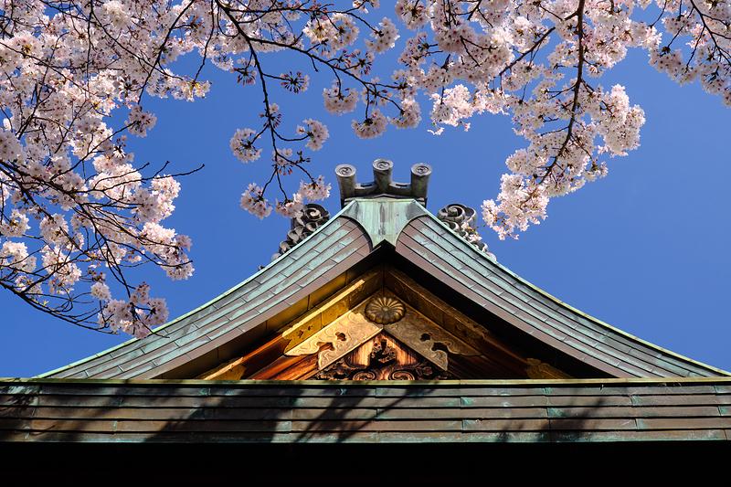 Blooming, at Tenson Shrine