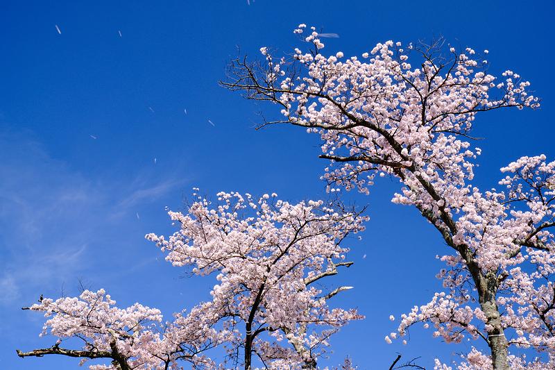 petals set free